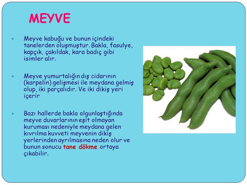 MEYVE Meyve kabuğu ve bunun içindeki tanelerden oluşmuştur.