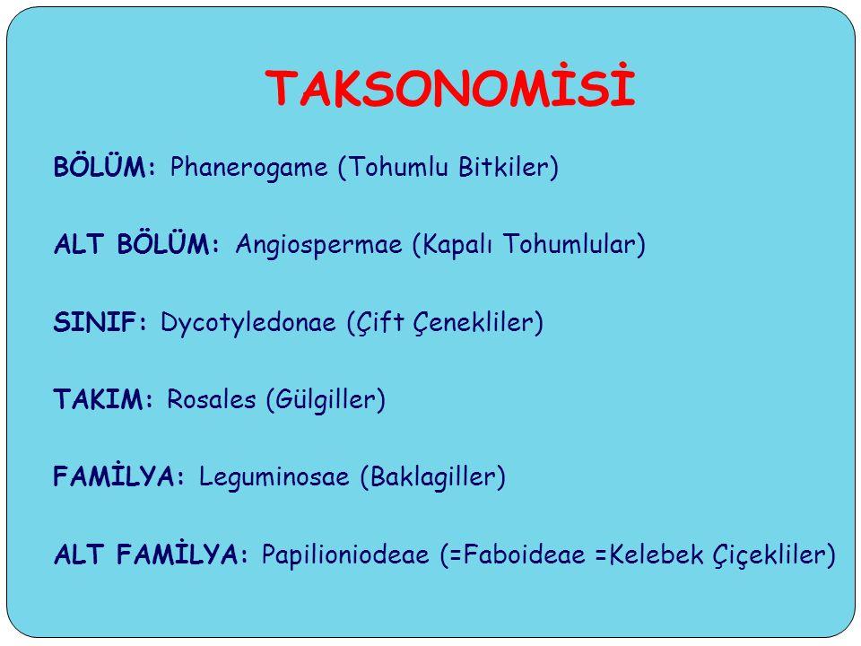 TAKSONOMİSİ BÖLÜM: Phanerogame (Tohumlu Bitkiler) ALT BÖLÜM: Angiospermae (Kapalı Tohumlular) SINIF: Dycotyledonae (Çift Çenekliler) TAKIM: Rosales (Gülgiller) FAMİLYA: Leguminosae (Baklagiller) ALT FAMİLYA: Papilioniodeae (=Faboideae =Kelebek Çiçekliler)