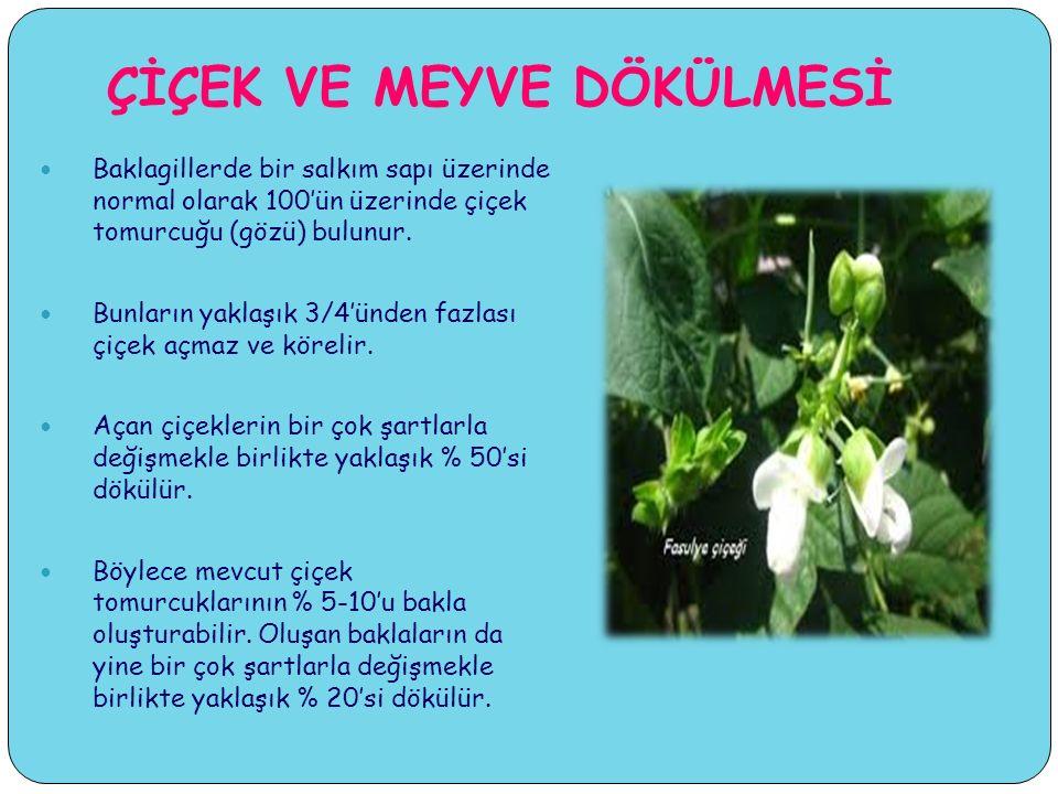 ÇİÇEK VE MEYVE DÖKÜLMESİ Baklagillerde bir salkım sapı üzerinde normal olarak 100'ün üzerinde çiçek tomurcuğu (gözü) bulunur.