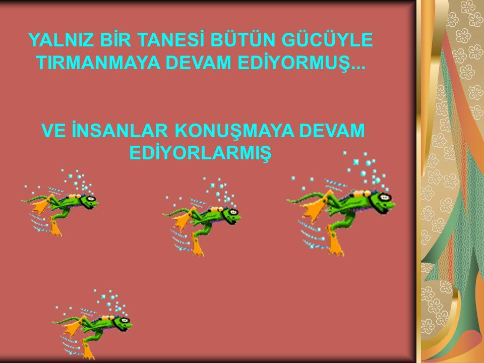 YALNIZ BİR TANESİ BÜTÜN GÜCÜYLE TIRMANMAYA DEVAM EDİYORMUŞ...