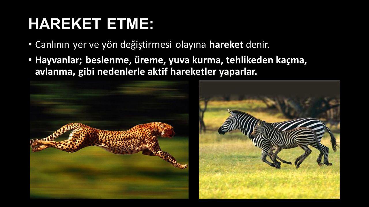 HAREKET ETME: Canlının yer ve yön değiştirmesi olayına hareket denir. Hayvanlar; beslenme, üreme, yuva kurma, tehlikeden kaçma, avlanma, gibi nedenler