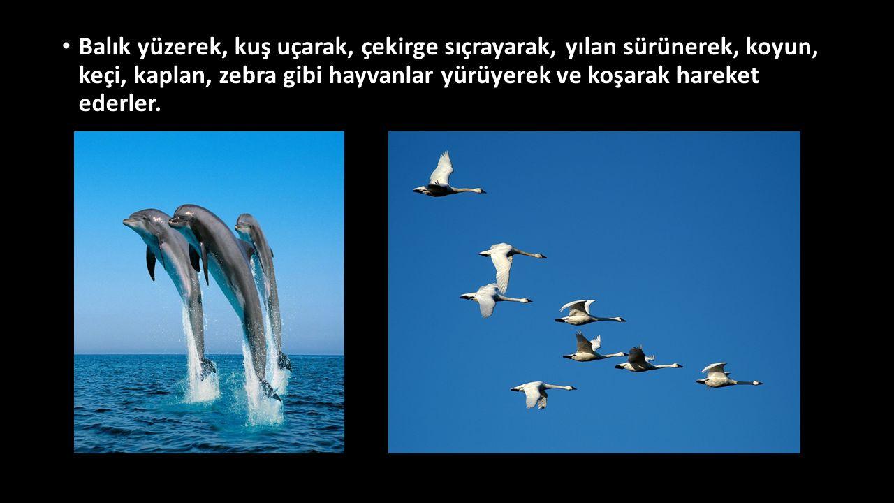 Balık yüzerek, kuş uçarak, çekirge sıçrayarak, yılan sürünerek, koyun, keçi, kaplan, zebra gibi hayvanlar yürüyerek ve koşarak hareket ederler.