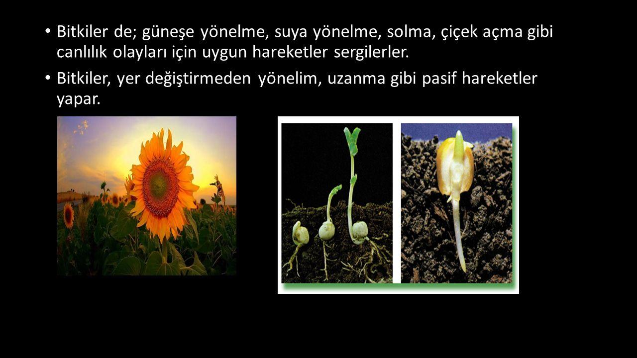 Bitkiler de; güneşe yönelme, suya yönelme, solma, çiçek açma gibi canlılık olayları için uygun hareketler sergilerler. Bitkiler, yer değiştirmeden yön