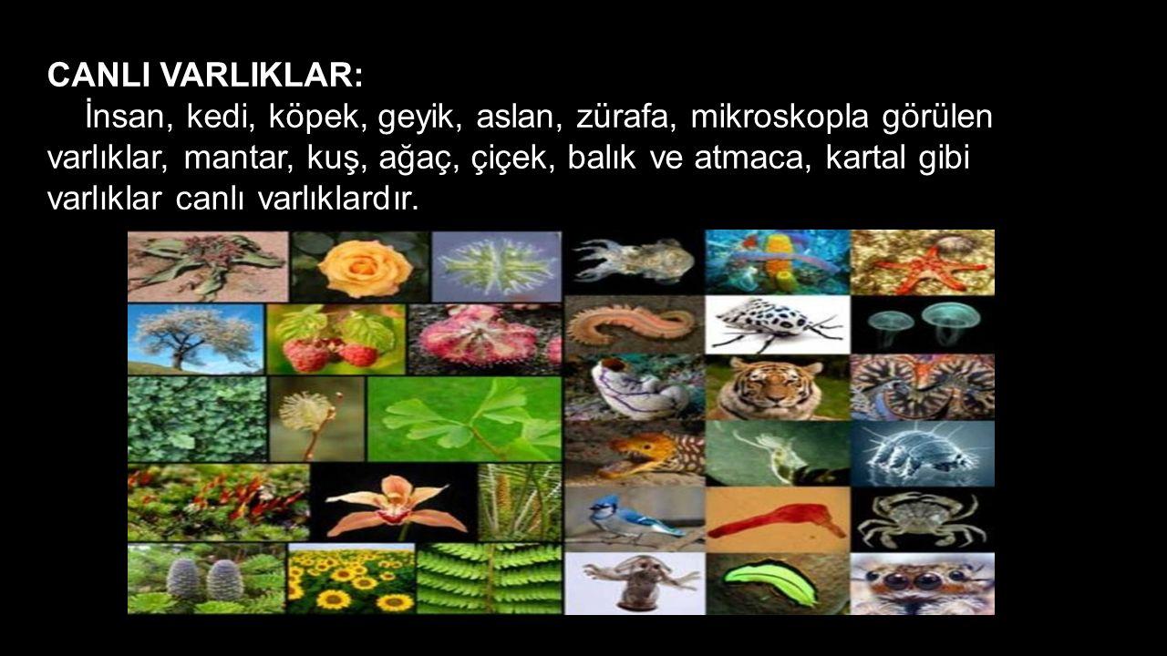 CANLI VARLIKLAR: İnsan, kedi, köpek, geyik, aslan, zürafa, mikroskopla görülen varlıklar, mantar, kuş, ağaç, çiçek, balık ve atmaca, kartal gibi varlı