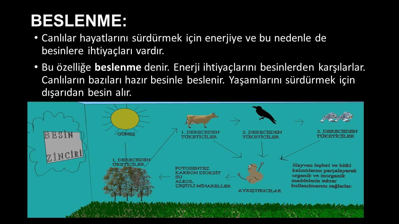 BESLENME: Canlılar hayatlarını sürdürmek için enerjiye ve bu nedenle de besinlere ihtiyaçları vardır. Bu özelliğe beslenme denir. Enerji ihtiyaçlarını