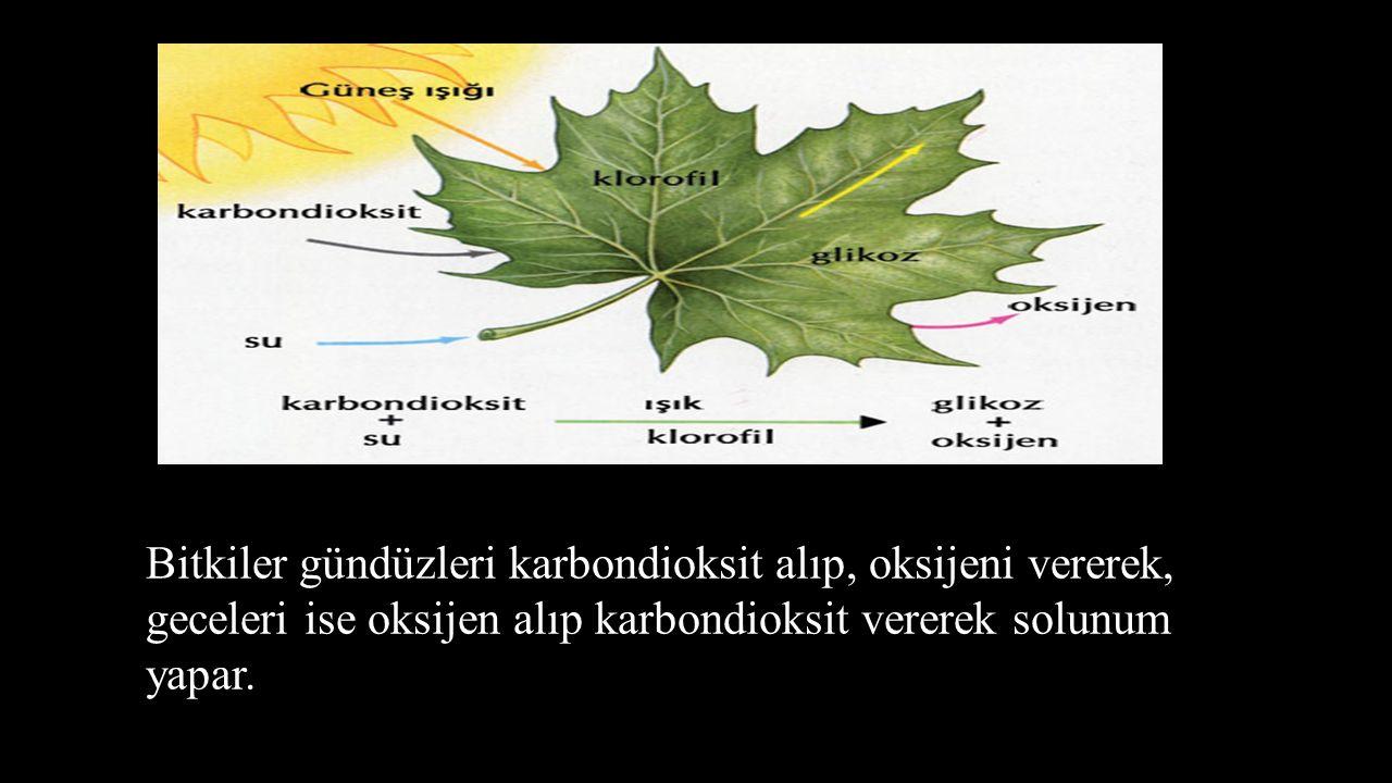 Bitkilerde soluk alıp verme organı yapraklardır. Bitkiler gündüzleri karbondioksit alıp, oksijeni vererek, geceleri ise oksijen alıp karbondioksit ver