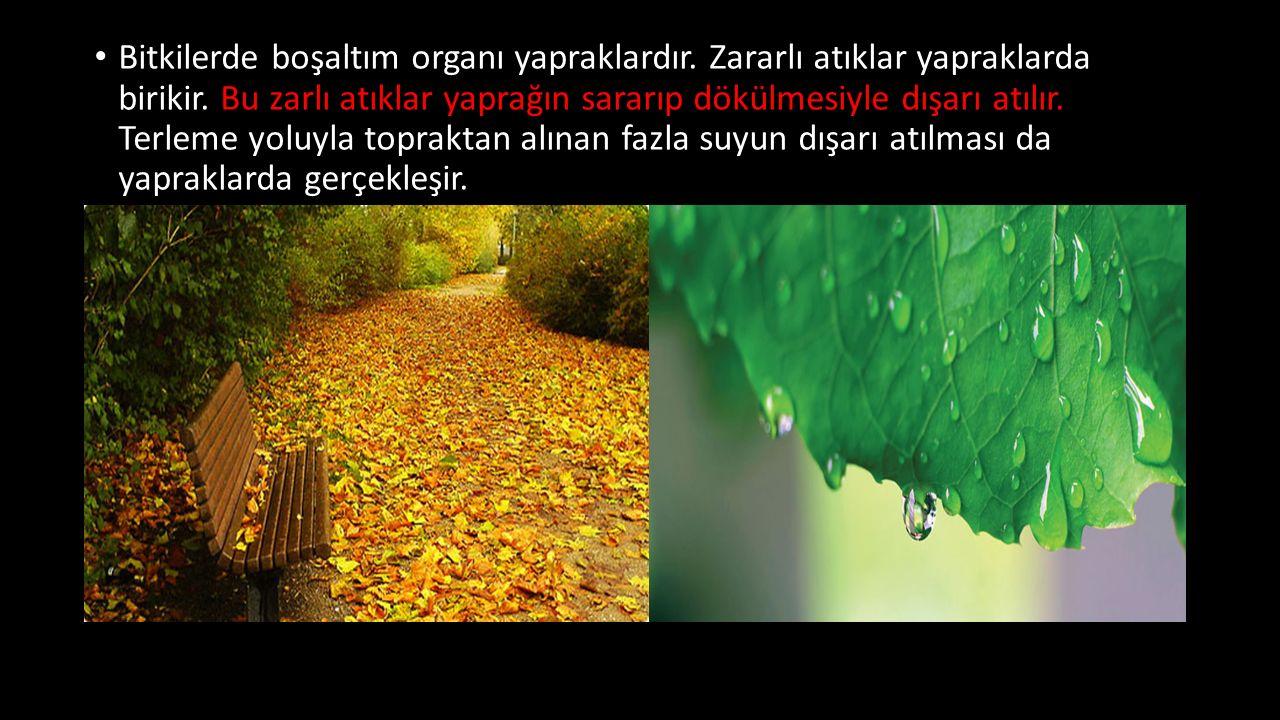 Bitkilerde boşaltım organı yapraklardır. Zararlı atıklar yapraklarda birikir. Bu zarlı atıklar yaprağın sararıp dökülmesiyle dışarı atılır. Terleme yo