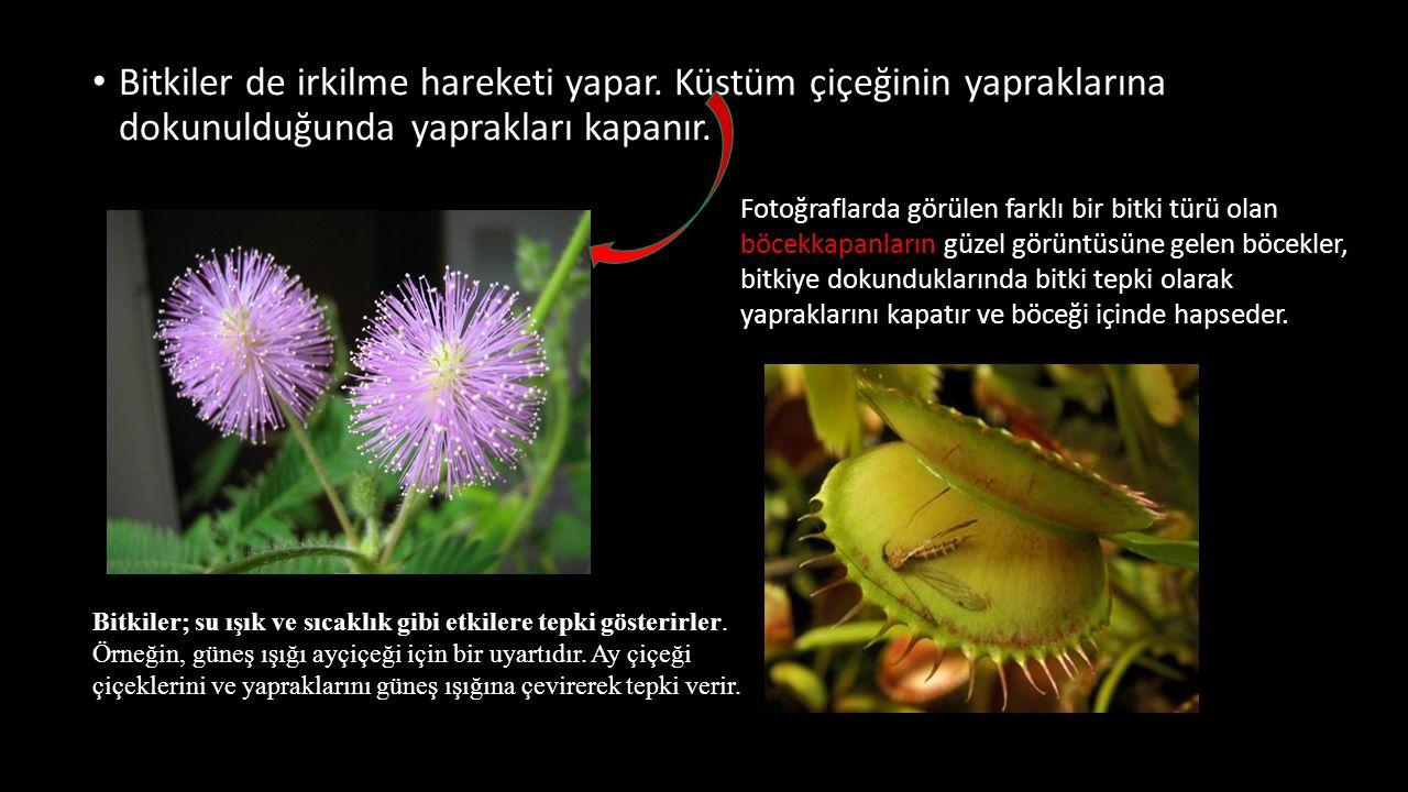 Bitkiler de irkilme hareketi yapar. Küstüm çiçeğinin yapraklarına dokunulduğunda yaprakları kapanır. Fotoğraflarda görülen farklı bir bitki türü olan