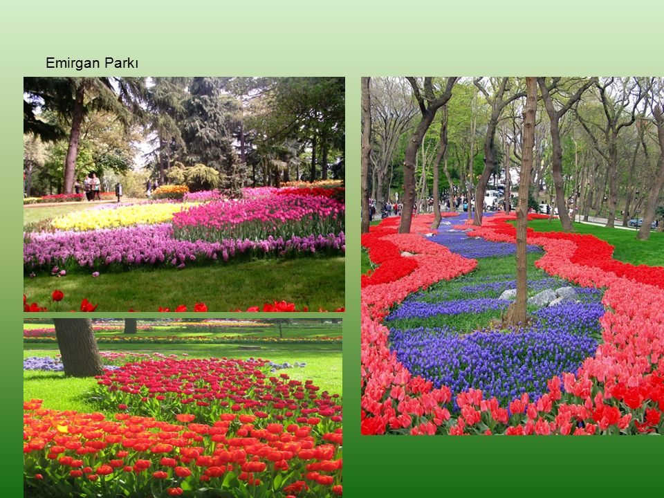 Emirgan Parkı