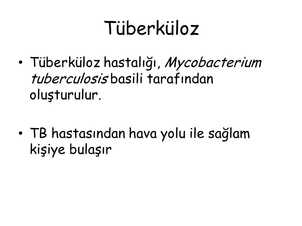 Tüberküloz Tüberküloz hastalığı, Mycobacterium tuberculosis basili tarafından oluşturulur.