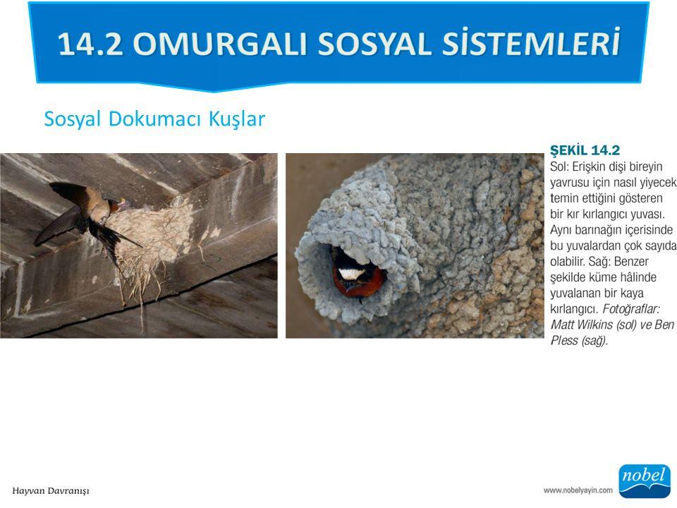 Sosyal Dokumacı Kuşlar