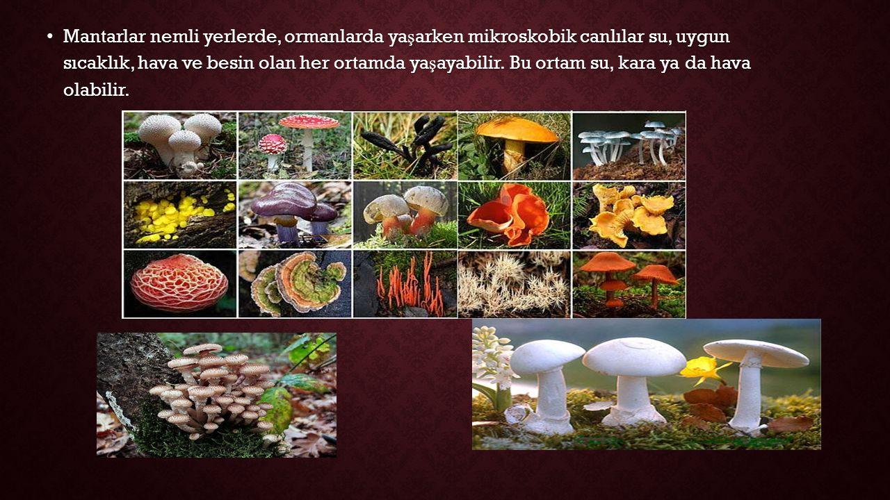 Mantarlar nemli yerlerde, ormanlarda ya ş arken mikroskobik canlılar su, uygun sıcaklık, hava ve besin olan her ortamda ya ş ayabilir.
