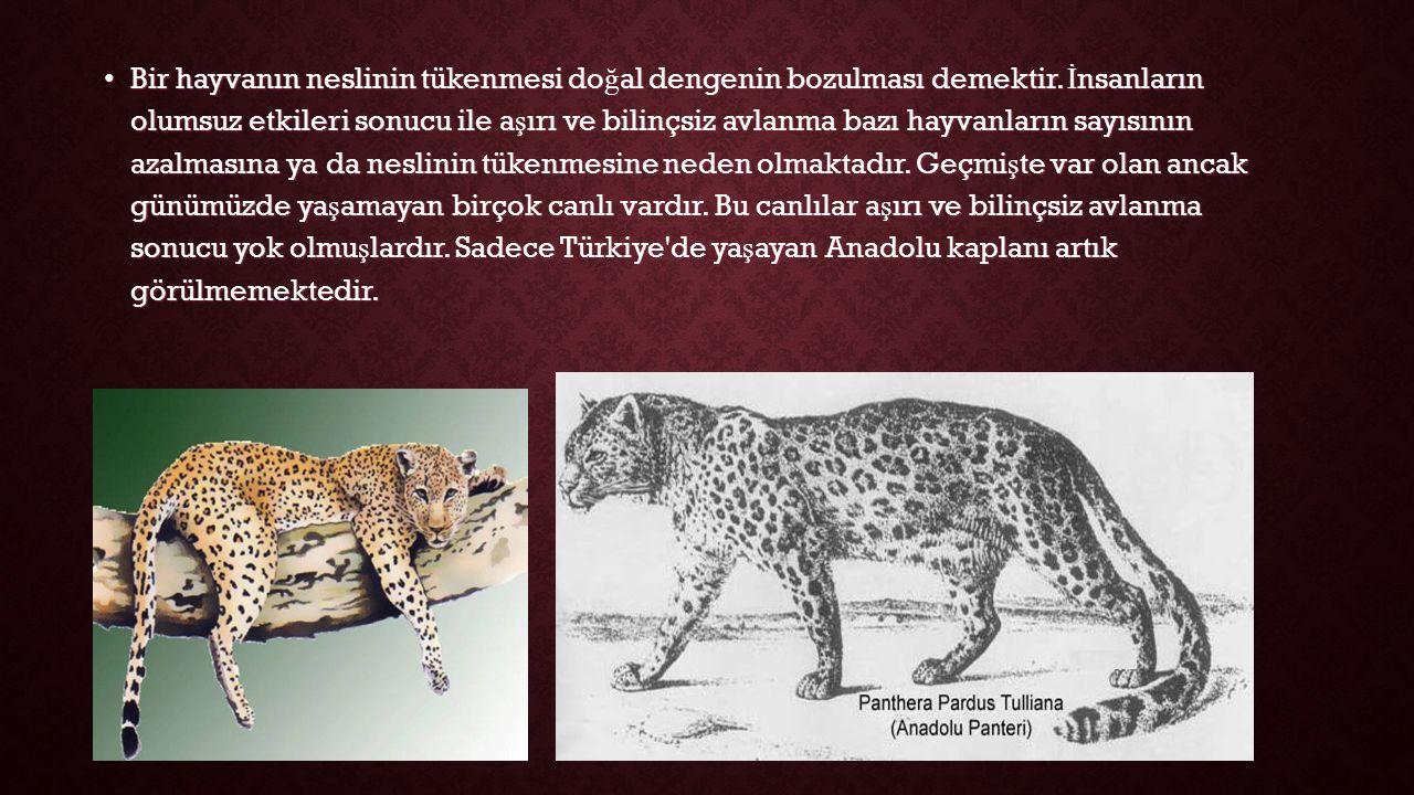 Bir hayvanın neslinin tükenmesi do ğ al dengenin bozulması demektir.