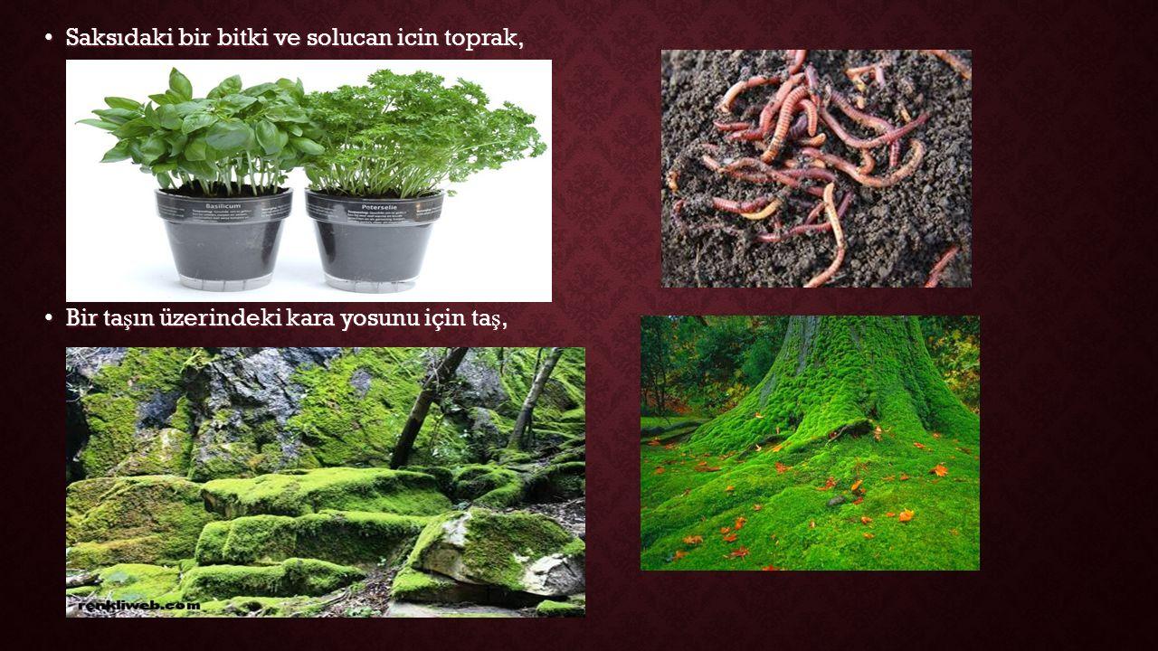 Saksıdaki bir bitki ve solucan icin toprak, Saksıdaki bir bitki ve solucan icin toprak, Bir ta ş ın üzerindeki kara yosunu için ta ş, Bir ta ş ın üzerindeki kara yosunu için ta ş,