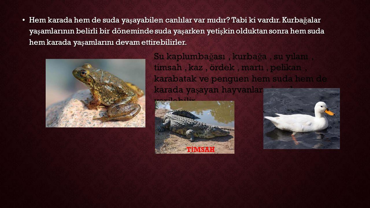 Hem karada hem de suda ya ş ayabilen canlılar var mıdır.