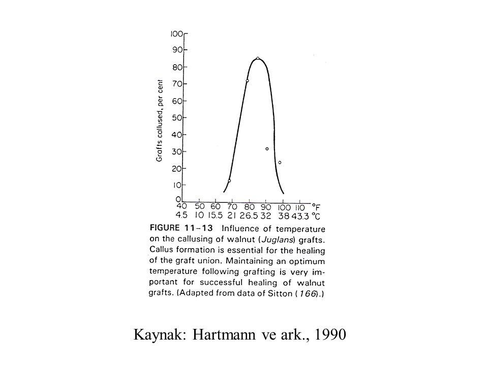 C: cambium, N: necrotic areas X: xylem, NX, new xylem, P: phloem 1997 yılı, T aşı, aşıdan 6 ay sonra alınan örneklerde boyuna kesit, T'nin alt kısmı aşı birleşme yeri