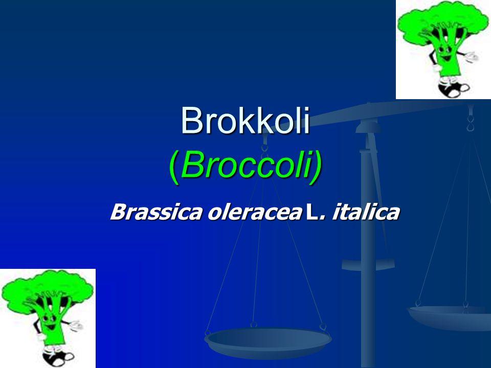 Brokkoli (Broccoli) Brassica oleracea L. italica