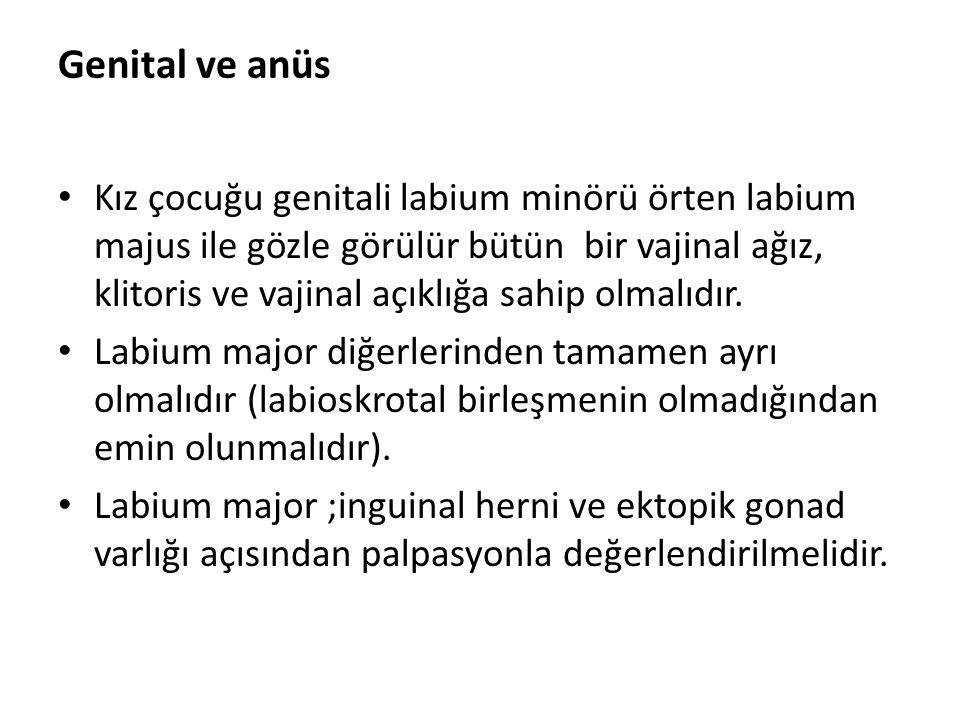 Genital ve anüs Kız çocuğu genitali labium minörü örten labium majus ile gözle görülür bütün bir vajinal ağız, klitoris ve vajinal açıklığa sahip olma