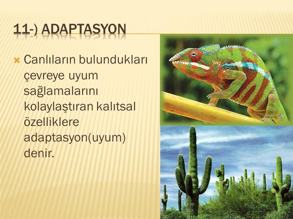  Canlıların bulundukları çevreye uyum sağlamalarını kolaylaştıran kalıtsal özelliklere adaptasyon(uyum) denir.