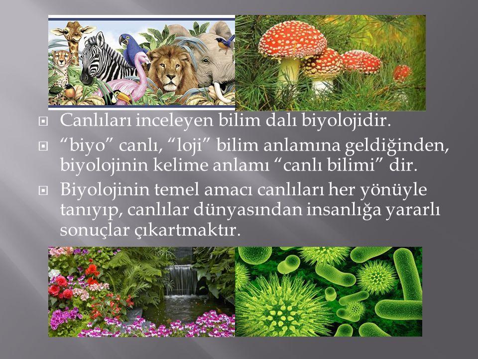""" Canlıları inceleyen bilim dalı biyolojidir.  """"biyo"""" canlı, """"loji"""" bilim anlamına geldiğinden, biyolojinin kelime anlamı """"canlı bilimi"""" dir.  Biyol"""