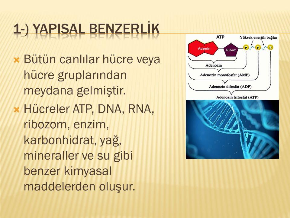  Bütün canlılar hücre veya hücre gruplarından meydana gelmiştir.  Hücreler ATP, DNA, RNA, ribozom, enzim, karbonhidrat, yağ, mineraller ve su gibi b