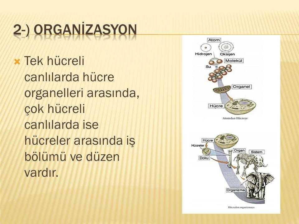  a) ototrof beslenme: Canlıların ihtiyaç duydukları organik besinleri, inorganik maddelerden kendilerinin üretmesidir.