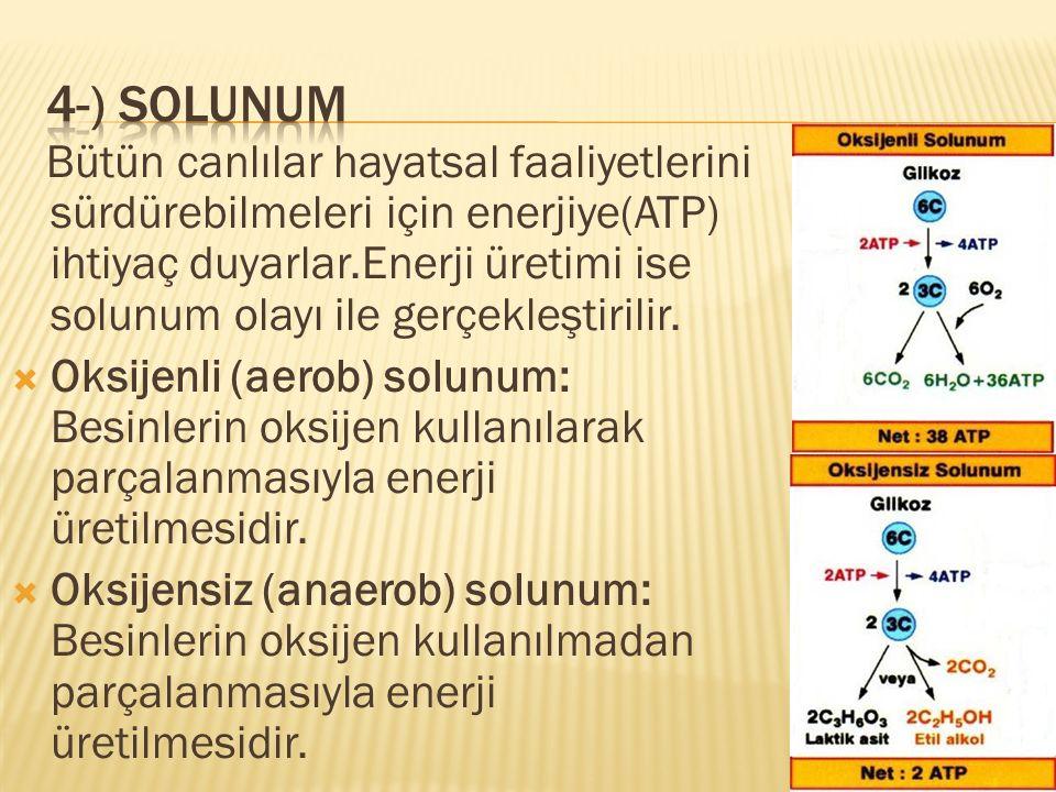 Bütün canlılar hayatsal faaliyetlerini sürdürebilmeleri için enerjiye(ATP) ihtiyaç duyarlar.Enerji üretimi ise solunum olayı ile gerçekleştirilir.  O