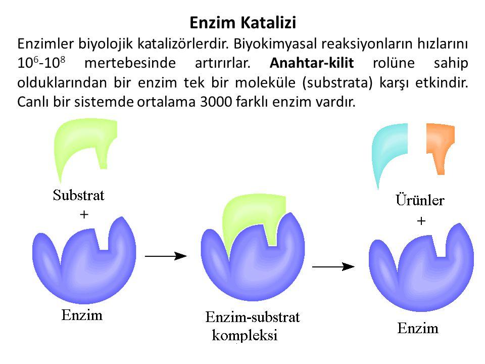 39 Enzim Katalizi Enzimler biyolojik katalizörlerdir.