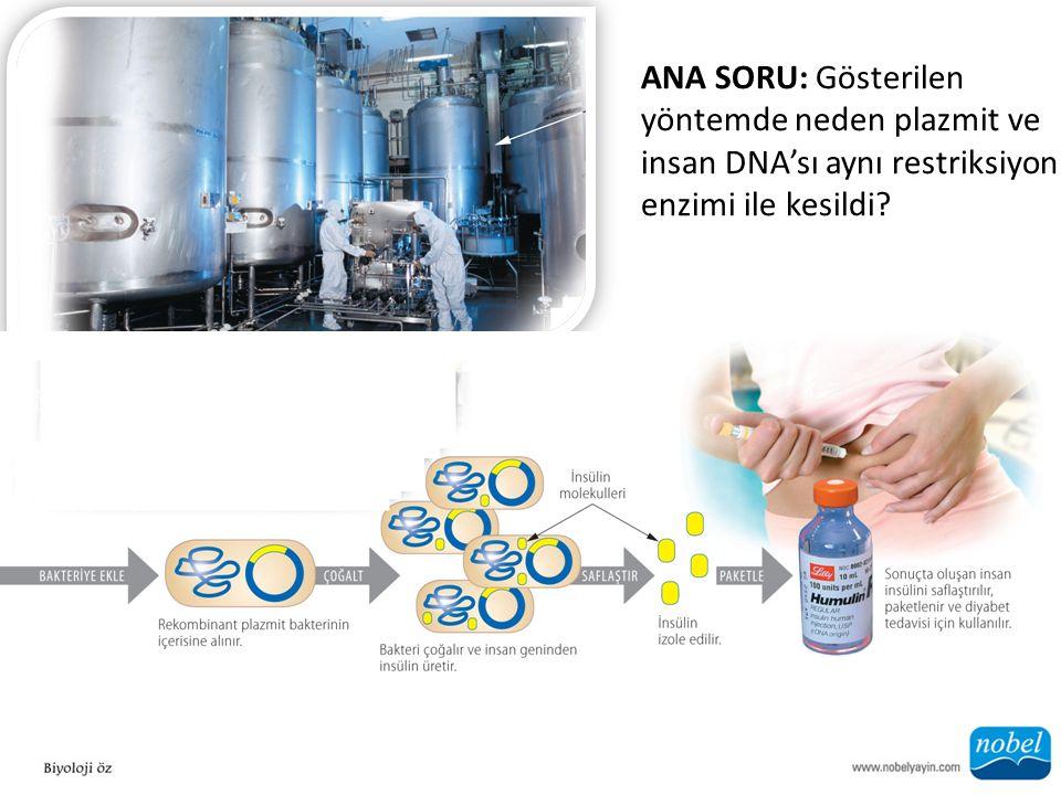 ANA SORU: Gösterilen yöntemde neden plazmit ve insan DNA'sı aynı restriksiyon enzimi ile kesildi