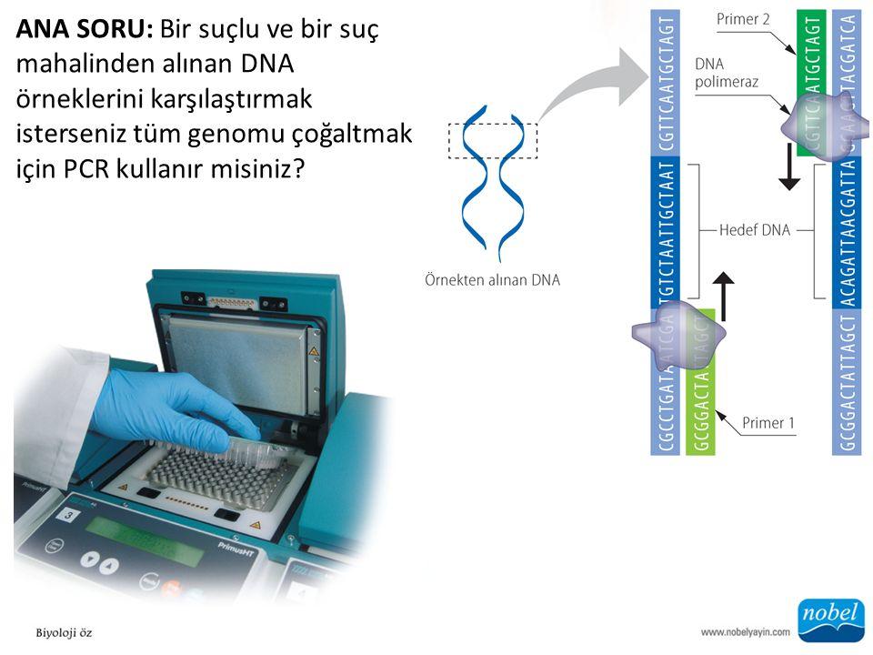 ANA SORU: Bir suçlu ve bir suç mahalinden alınan DNA örneklerini karşılaştırmak isterseniz tüm genomu çoğaltmak için PCR kullanır misiniz