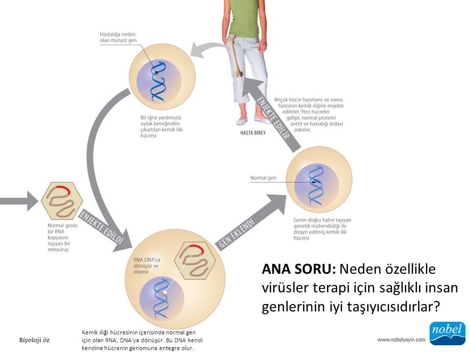 Kemik iliği hücresinin içerisinde normal gen için olan RNA, DNA'ya dönüşür.