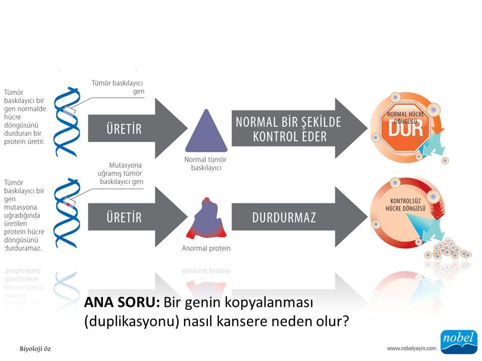 ANA SORU: Bir genin kopyalanması (duplikasyonu) nasıl kansere neden olur?