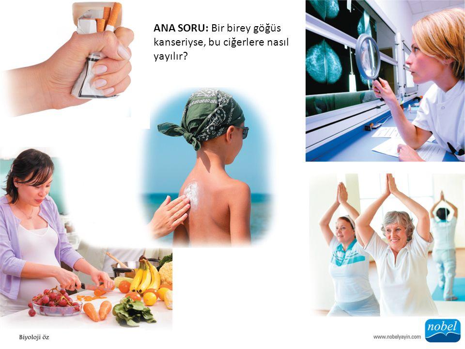 ANA SORU: Bir birey göğüs kanseriyse, bu ciğerlere nasıl yayılır