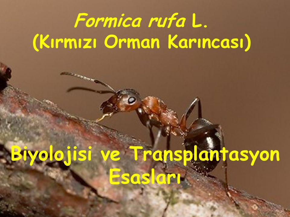 Biyolojisi ve Transplantasyon Esasları Formica rufa L. (Kırmızı Orman Karıncası)