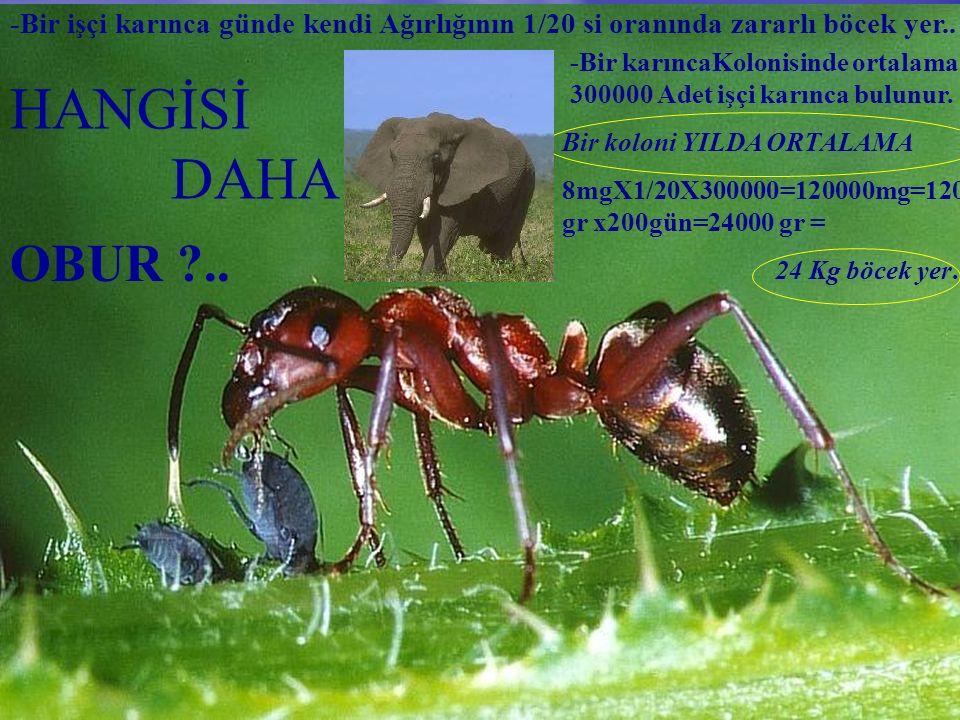 HANGİSİ DAHA OBUR ?.. -Bir işçi karınca günde kendi Ağırlığının 1/20 si oranında zararlı böcek yer.. -Bir karıncaKolonisinde ortalama 300000 Adet işçi