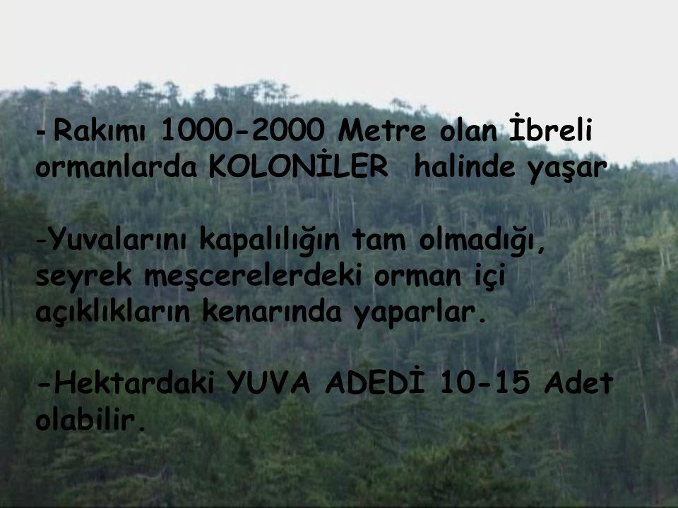 - Rakımı 1000-2000 Metre olan İbreli ormanlarda KOLONİLER halinde yaşar -Yuvalarını kapalılığın tam olmadığı, seyrek meşcerelerdeki orman içi açıklıkl