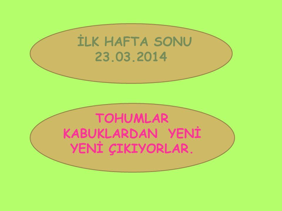 İLK HAFTA SONU 23.03.2014 TOHUMLAR KABUKLARDAN YENİ YENİ ÇIKIYORLAR.