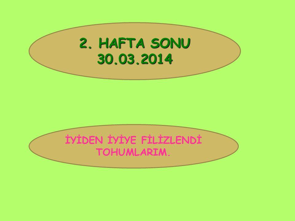 2. HAFTA SONU 30.03.2014 İYİDEN İYİYE FİLİZLENDİ TOHUMLARIM.