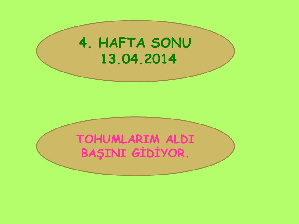4. HAFTA SONU 13.04.2014 TOHUMLARIM ALDI BAŞINI GİDİYOR.