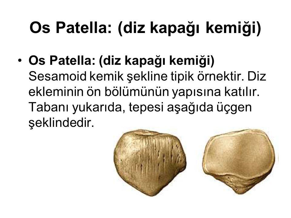 Os Patella: (diz kapağı kemiği) Os Patella: (diz kapağı kemiği) Sesamoid kemik şekline tipik örnektir. Diz ekleminin ön bölümünün yapısına katılır. Ta