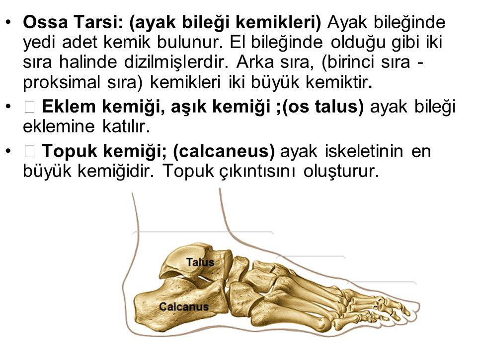 Ossa Tarsi: (ayak bileği kemikleri) Ayak bileğinde yedi adet kemik bulunur. El bileğinde olduğu gibi iki sıra halinde dizilmişlerdir. Arka sıra, (biri