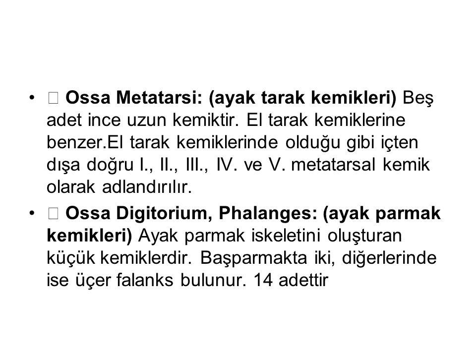  Ossa Metatarsi: (ayak tarak kemikleri) Beş adet ince uzun kemiktir. El tarak kemiklerine benzer.El tarak kemiklerinde olduğu gibi içten dışa doğru I