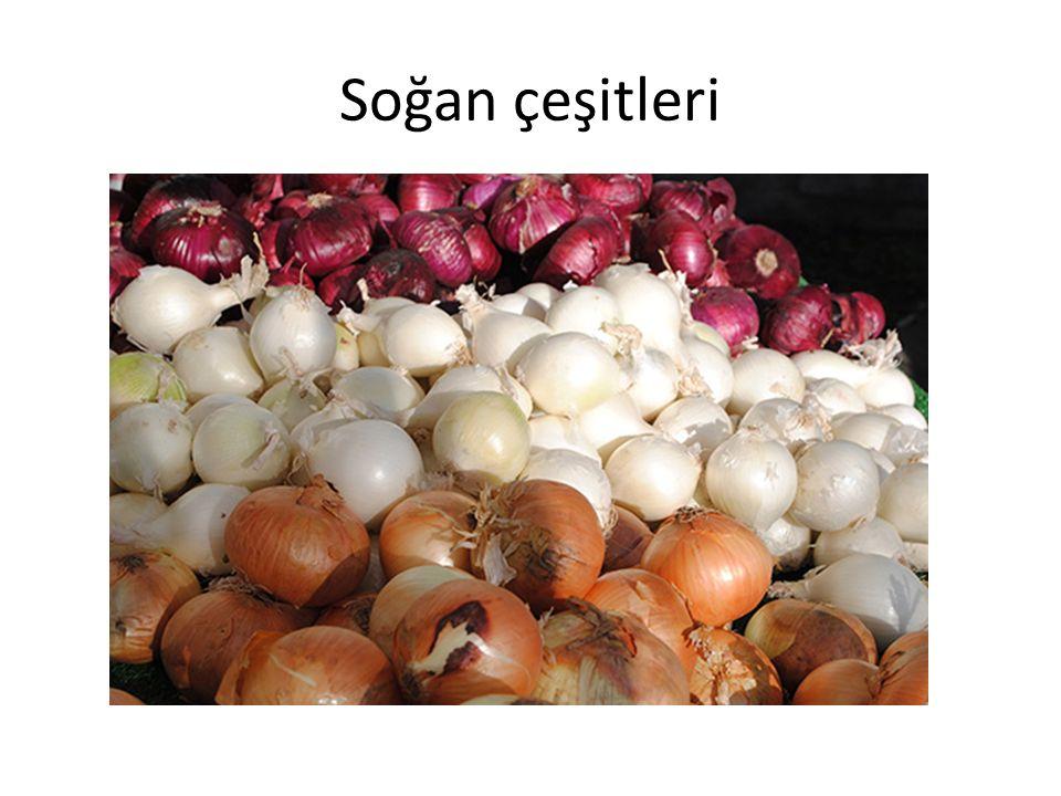 Soğan çeşitleri