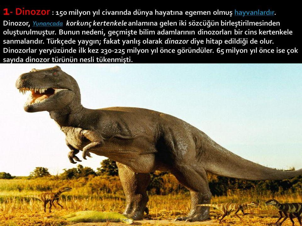  Dünyanın varoluşundan günümüze kadar birçok canlı türü (hayvan ve bitki) gelip geçti. Maalesef insanoğlu elindekinin kıymetini her zaman onu kaybett