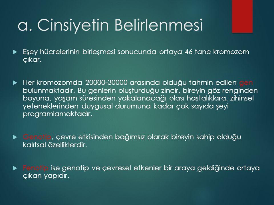 a.Cinsiyetin Belirlenmesi  Eşey hücrelerinin birleşmesi sonucunda ortaya 46 tane kromozom çıkar.