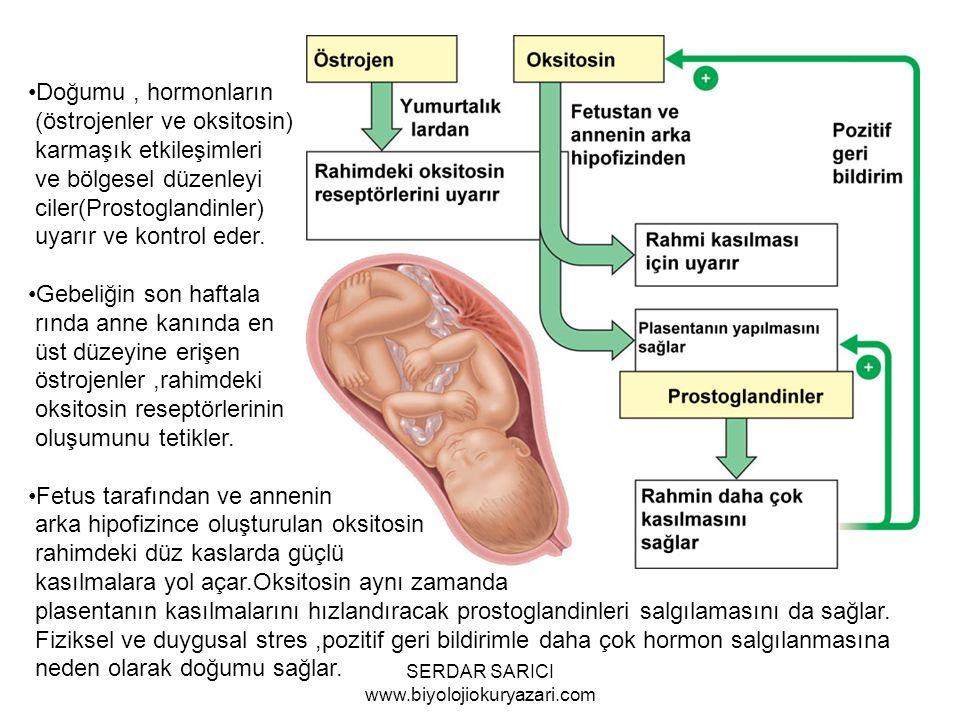 Doğumu, hormonların (östrojenler ve oksitosin) karmaşık etkileşimleri ve bölgesel düzenleyi ciler(Prostoglandinler) uyarır ve kontrol eder.
