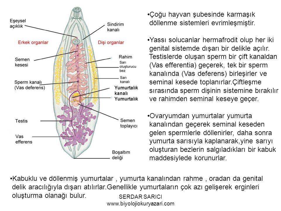 Yumurtalık Çoğu hayvan şubesinde karmaşık döllenme sistemleri evrimleşmiştir.
