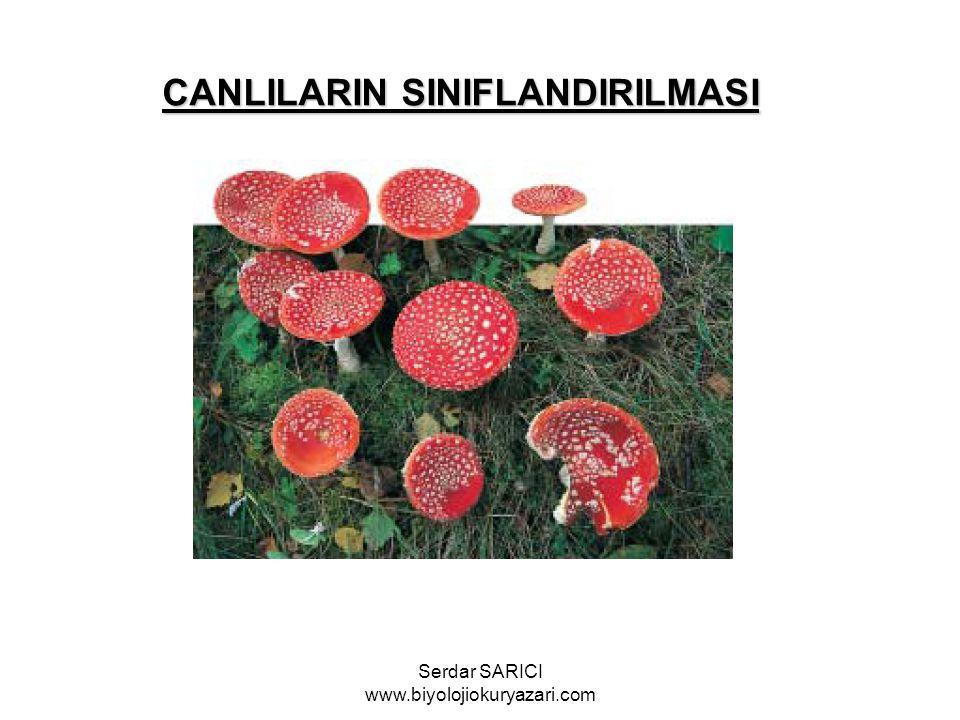 CANLILARIN SINIFLANDIRILMASI Serdar SARICI www.biyolojiokuryazari.com