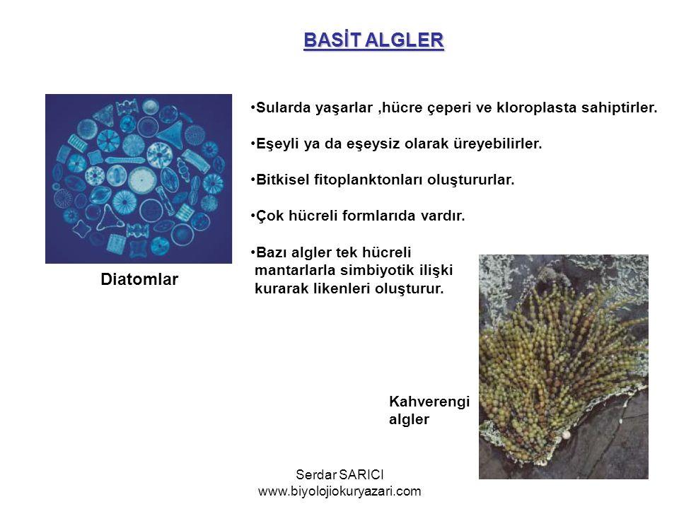 BASİT ALGLER Diatomlar Sularda yaşarlar,hücre çeperi ve kloroplasta sahiptirler. Eşeyli ya da eşeysiz olarak üreyebilirler. Bitkisel fitoplanktonları