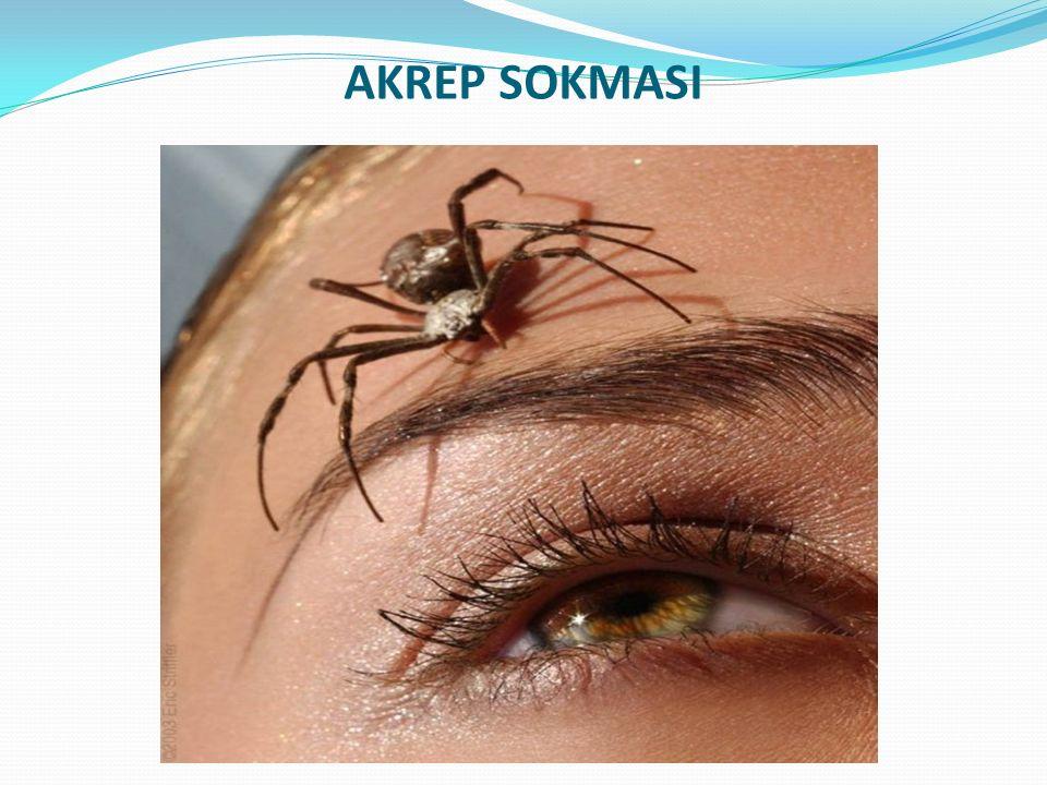 AKREP SOKMASI